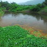 無尾港溼地由湧泉提供潔淨的水資源,提供淡水域生物遮蔽處。(圖片來源:邱郁文研究團隊)