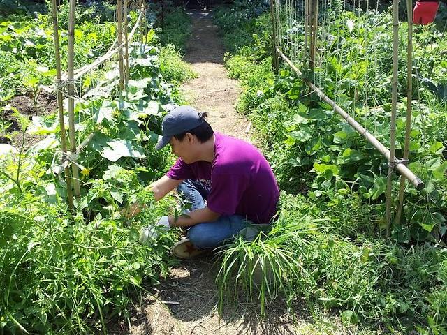Weeding in the Children's Garden. Photo by Hayley Levenson.