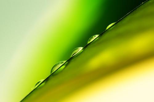 無料写真素材, 花・植物, 葉っぱ, 雫・水滴, 緑色・グリーン