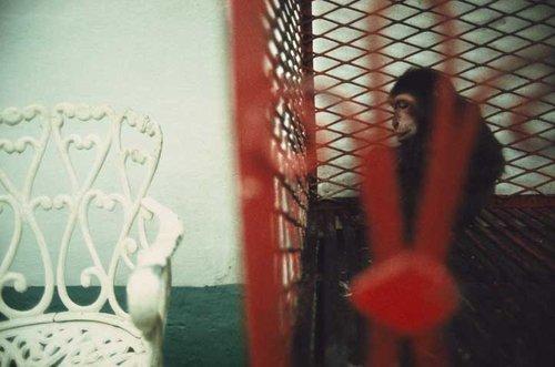 Rebecca Norris Webb, Havana, Cuba, 2003