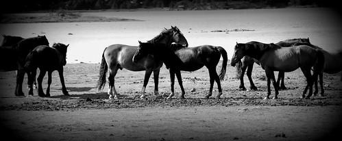 The horses in Oven #summer #norway #friends @heidenstrom by @heidenstrom