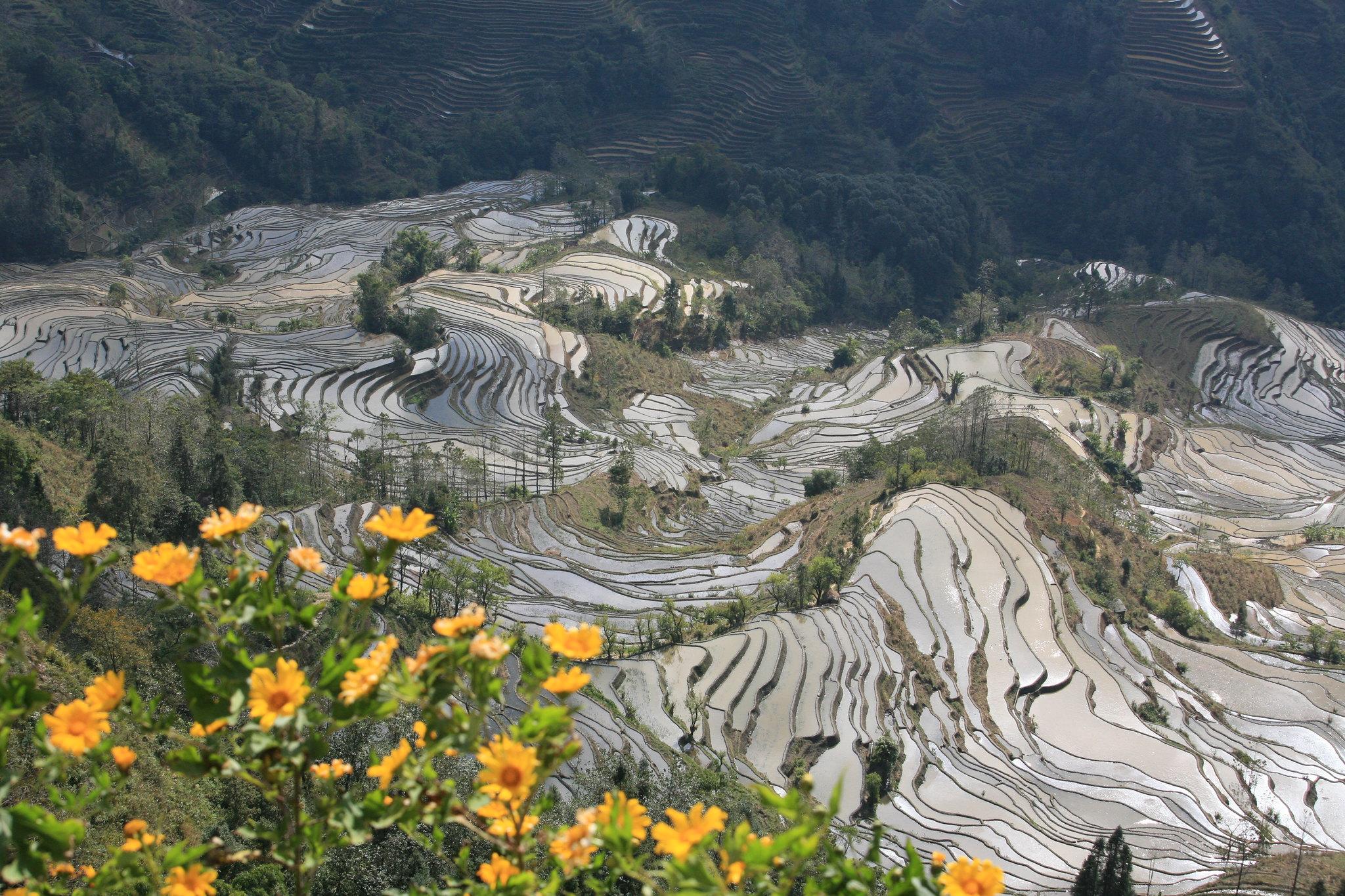 Hani rice terraces, China