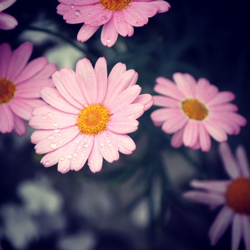kukkakakka