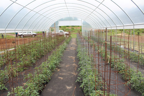 A seasonal high tunnel allows Danny Daniels to lengthen his growing season by six to eight weeks.
