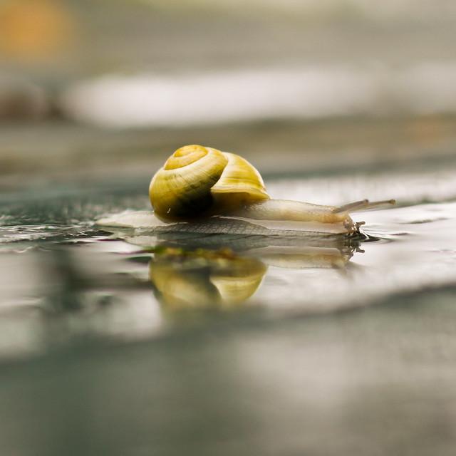 Un escargot (encore et encore)