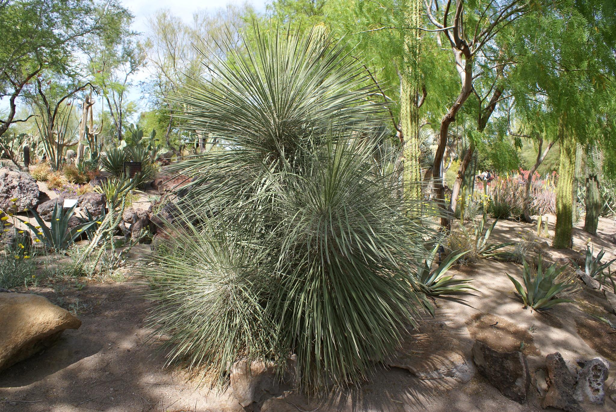 Ethel M Botanical Cactus Garden Ethel M Botanical Cactus G Flickr Photo Sharing