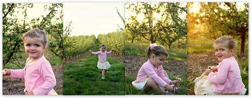Orchard edited