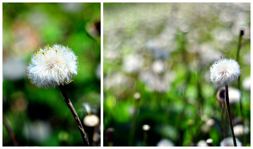 Dandelion Collage Tip Post