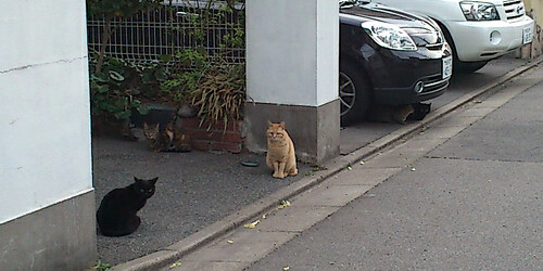 20120427_cats