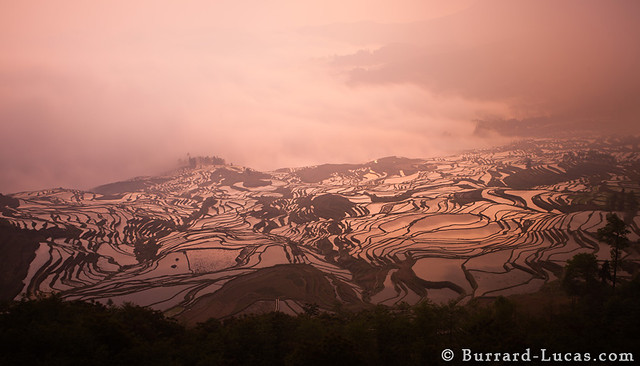 Rice Terraces at Dawn