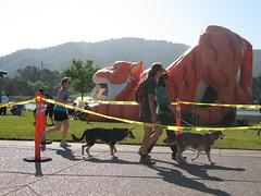 Marin Human Race 2012