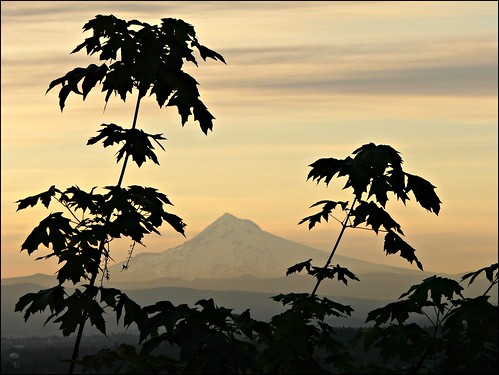 trees silhouette sunrise pale mthood rockybutte 100possibilities 112in2012