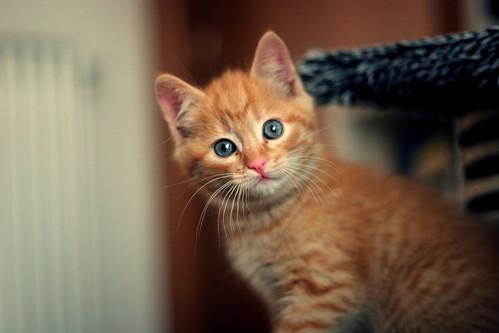 [フリー画像素材] 動物 1, 猫・ネコ, 子猫・小猫 ID:201206020400