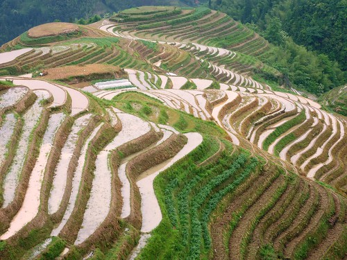 C-Guangxi-Pingan-Terrasse des 7 etoiles (56)