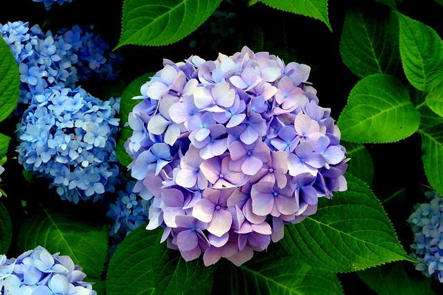 夏の風物詩 Minori Favarite Garden