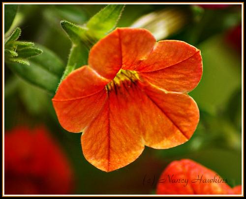 Orange by Nancy Hawkins