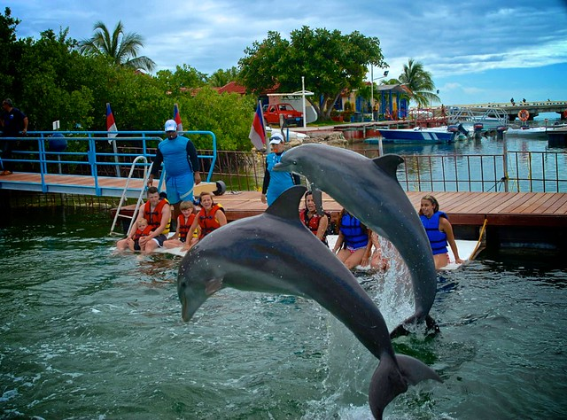 anteketborka.blogspot.com, dauphins5