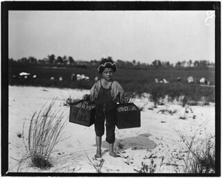 Salvin Nocito, 5 years old, carries 2 pecks of cranberries for long distance to the bushel man. Whites Bog, September 1910