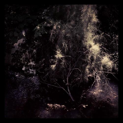 offbridge by Nature Morte