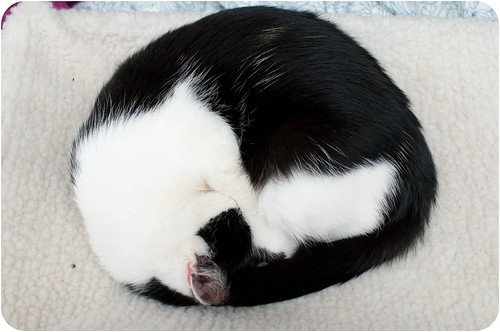Sleep Pixie