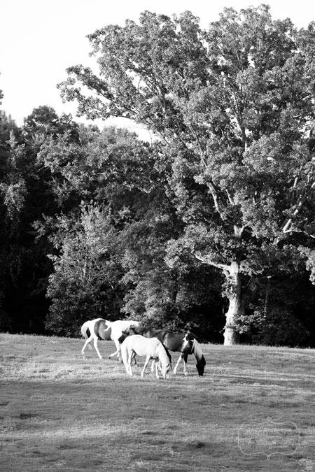 Horses_May192012_0034BW