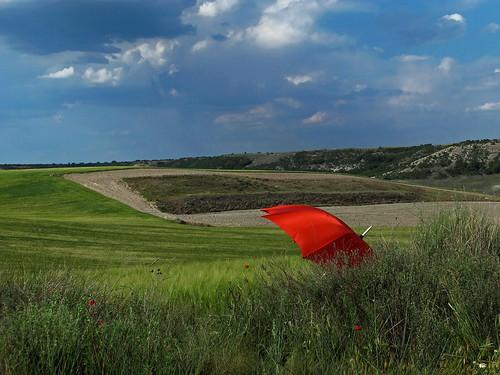 無料写真素材|自然風景|草原・草|傘