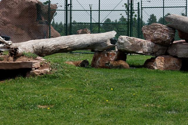 Reptile Gardens Bear Country Usa Flickr Photo Sharing