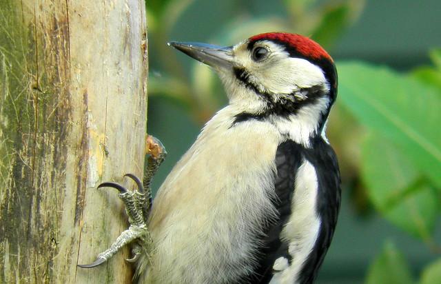 woodpecker 041 | Flickr - Photo Sharing!