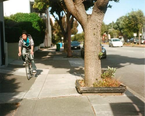 Tree, Rider