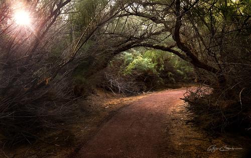 sun overgrown dark lasvegas nevada sunburst walkways bjorn burton nikond800 nikon2470mm28g lasvegaswetlands