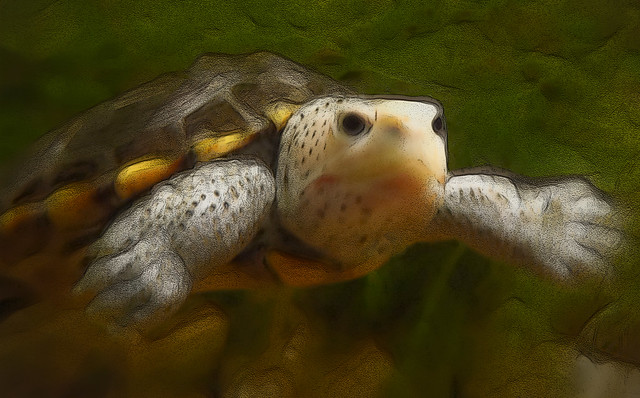 Turtle's world