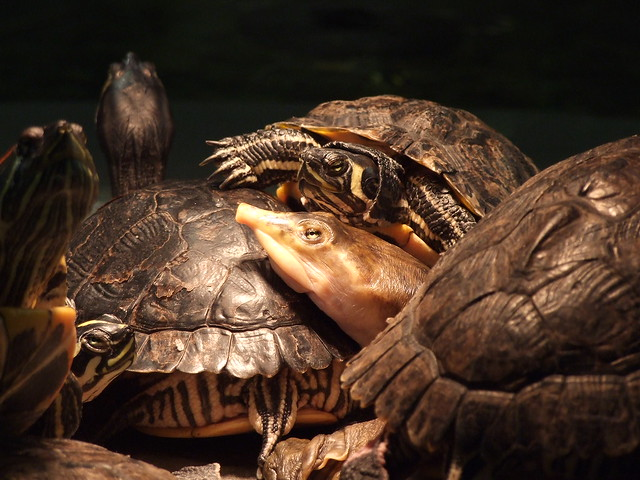 turtle under heat lamp Flickr - Photo Sharing!