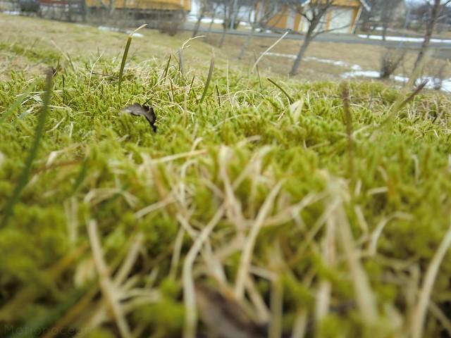 Moss: