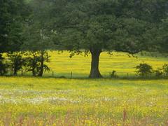 Flower meadow near Little Norlington