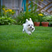 Hoverdog by canonslr999