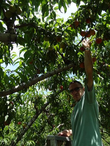 Peach Picking June 2012 (19)