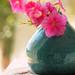 petunias by Majlee