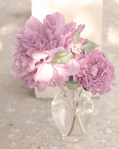 Peony Still by The Shutterbug Eye™
