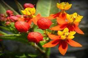 flora-fauna-canion-del-colca-arequipa
