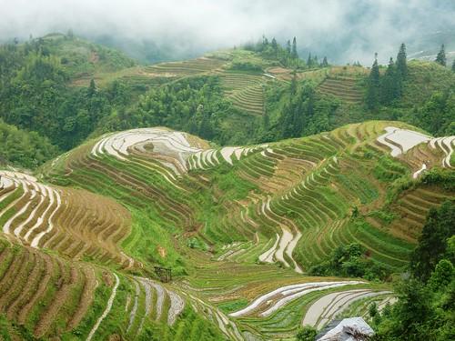 C-Guangxi-Pingan-Terrasse des 7 etoiles (52)