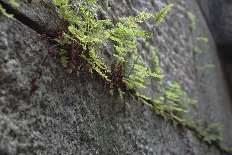 PlantsGrowingOnRocks