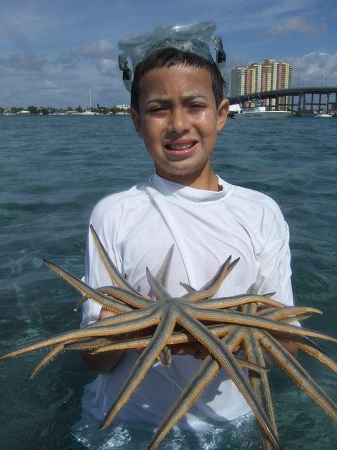Ethan finds 9 armed starfish.