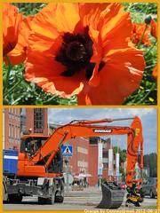Orange! (366/179 June 27, 2012)