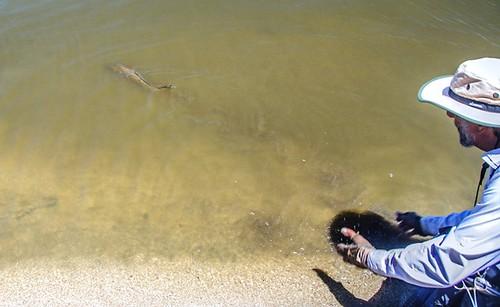 First annual lake henshaw carp throw down a success for Lake henshaw fishing