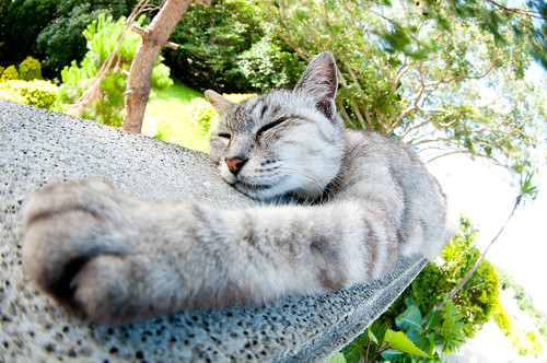 沖縄 今帰仁城址にいた猫