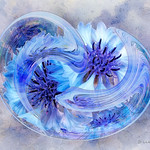 Circle of Life - Blue Corn Flowers