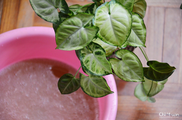 法鉑橄欖油黑肥皂13.jpg