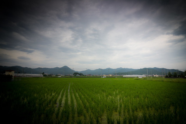 #9 The Lone Cryptomeria of Ikarugi