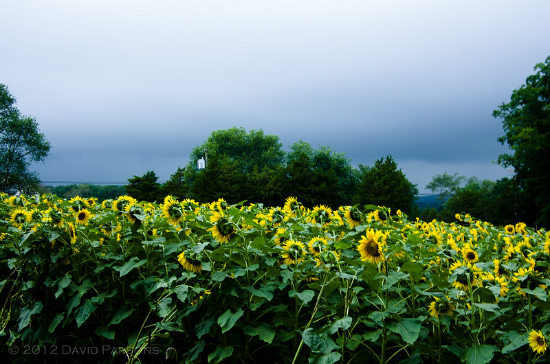 Buttonwood Farms - Approaching storm