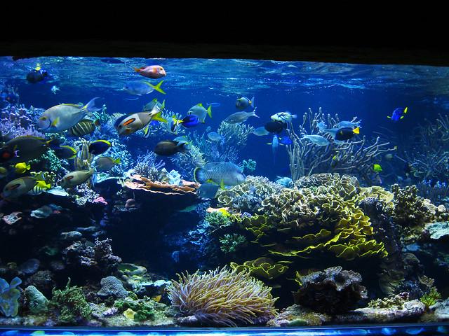 Long Island Reef Aquarium Left Half Flickr Photo Sharing